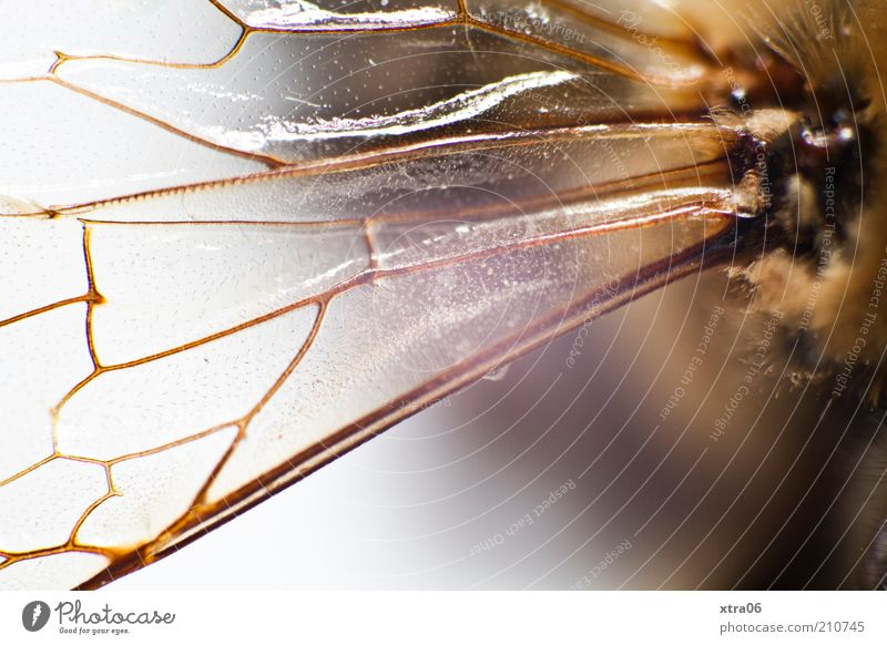 Animal Authentic Wing Thin Insect Delicate Fine Fragile Macro (Extreme close-up)