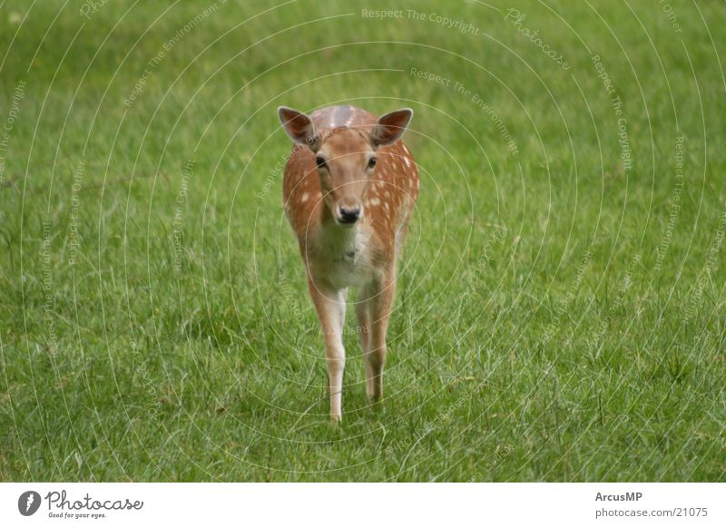 Nature Animal Wild animal Deer Roe deer