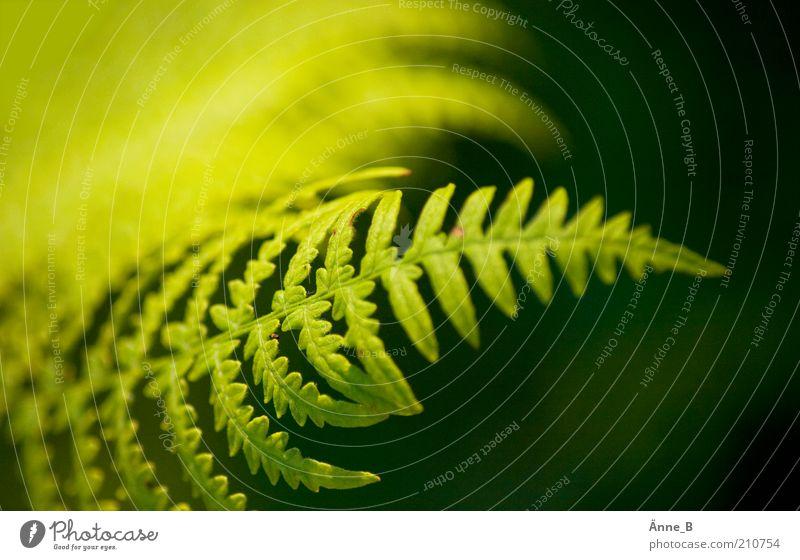 Nature Green Plant Summer Leaf Yellow Colour Environment Fresh Esthetic Growth Natural Bushes Elements Decoration Clean