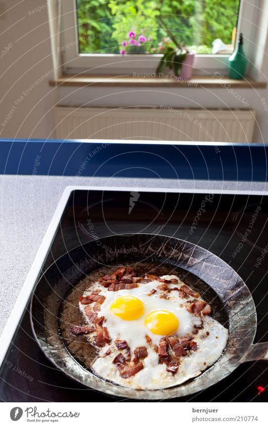 sunny side up Bacon Egg Fried egg sunny-side up Deserted Bacon cube Pan iron pan Stove & Oven Kitchen Black Fat Window Hot plate Living or residing