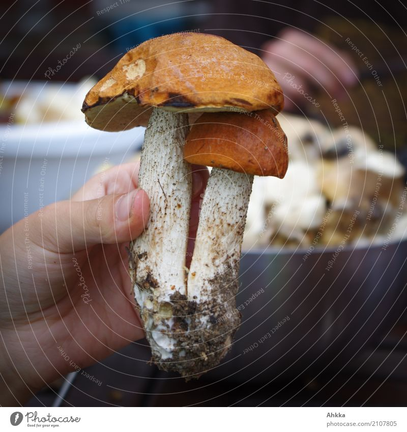 red cap Food Leisure and hobbies Mushroom picker Human being Hand Environment Nature Discover Brown Contentment Joie de vivre (Vitality) Trust Safety Protection
