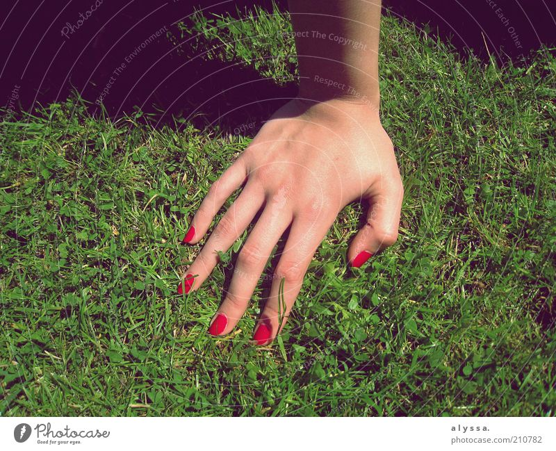 Hand Youth (Young adults) Green Red Feminine Grass Adults Human being Fingernail Support Young woman Nail polish Varnished Women`s hand 18 - 30 years