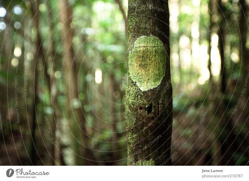 Tree Green Forest Fresh Round Thin Exceptional Sign Symbols and metaphors Tree trunk Tree bark Natural growth