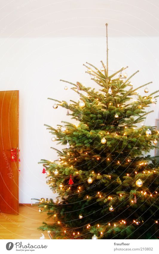 Christmas & Advent Green White Tree Winter Yellow Brown Bright Together Glittering Illuminate Decoration Door Gold Tall Joie de vivre (Vitality)
