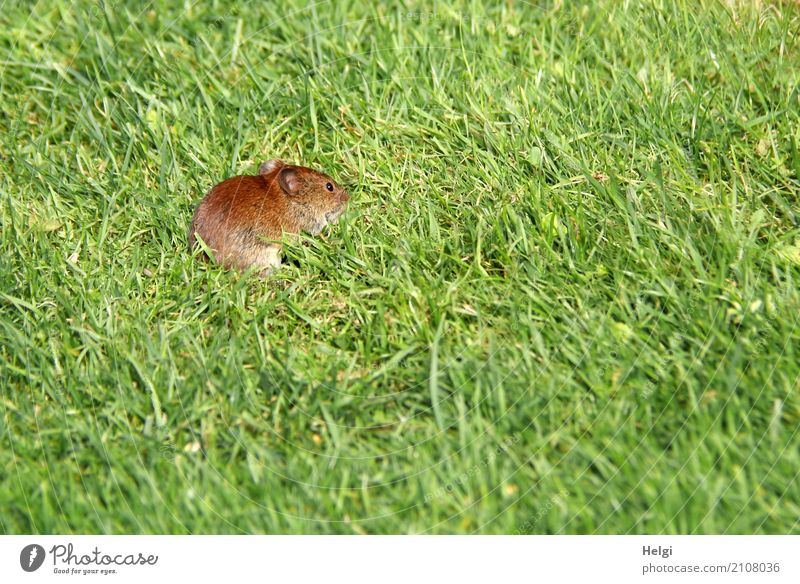 Nature Plant Summer Green Animal Life Environment Natural Grass Small Exceptional Garden Freedom Brown Wild animal Beautiful weather