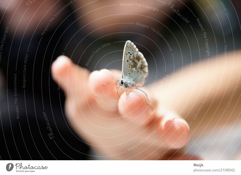 Leptir afternoon Nature Animal Butterfly Wing 1 To enjoy Authentic Brown Gray Pink Black White Trust Calm Elegant Environment Beauty & Beauty Sensitive Europe