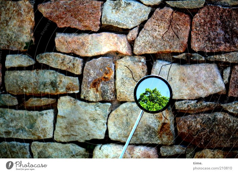 Tree Green Wall (building) Stone Wall (barrier) Metal Large Rock Perspective Metalware Mirror Motorcycle Fat Furrow Scooter