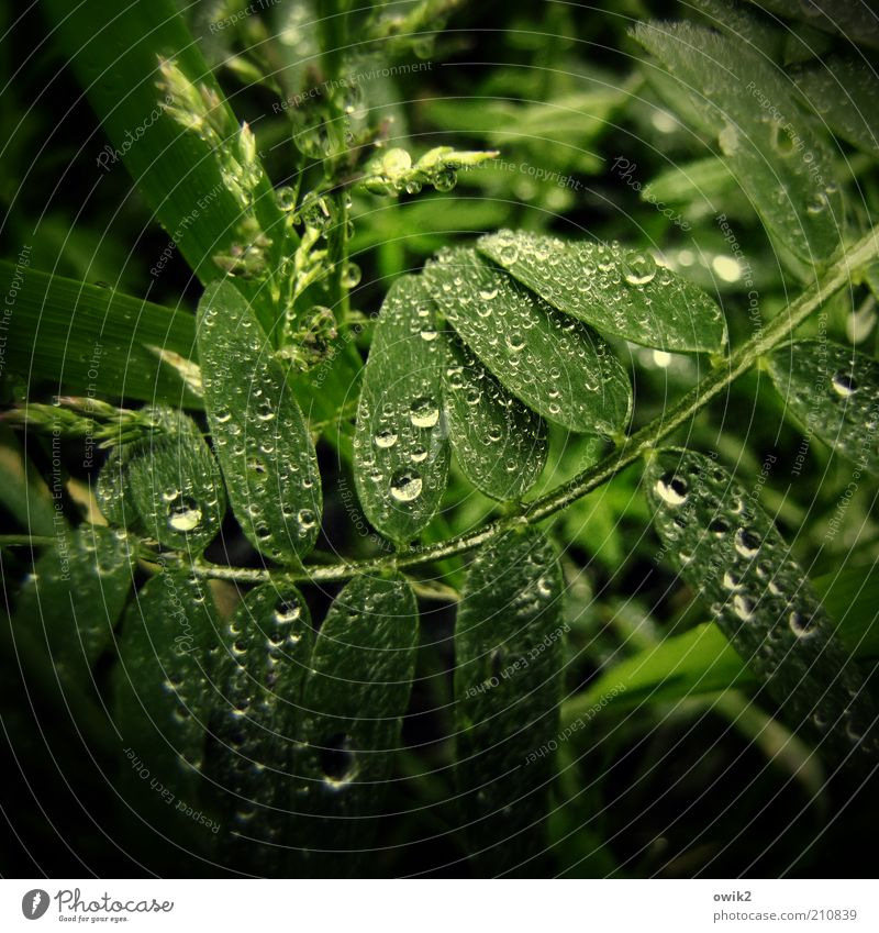 rainforest Environment Nature Plant Water Summer Climate Weather Bushes Leaf Foliage plant Wild plant Glittering Green Drops of water Rain Precipitation