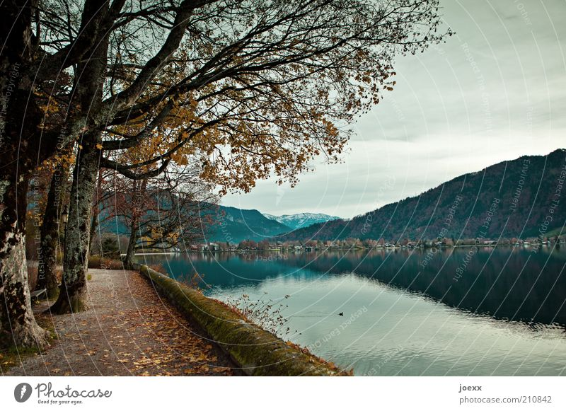sea route Nature Autumn Tree Mountain Lakeside Blue Brown Calm Idyll Tegernsee Autumnal Sadness Colour photo Subdued colour Exterior shot Deserted Day