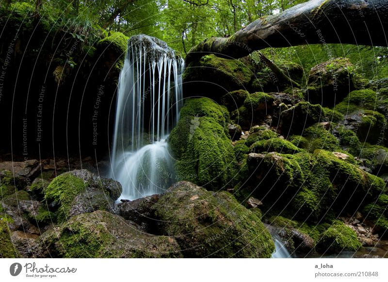 Nature Tree Green Summer Forest Dark Movement Line Contentment Wet Rock Growth Authentic Pure Natural Fluid