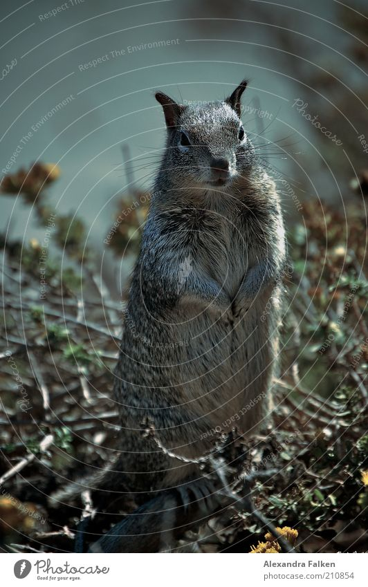 Nature Animal Stand Posture Pelt Living thing Wild animal Cute Expectation Brash Squirrel Rodent