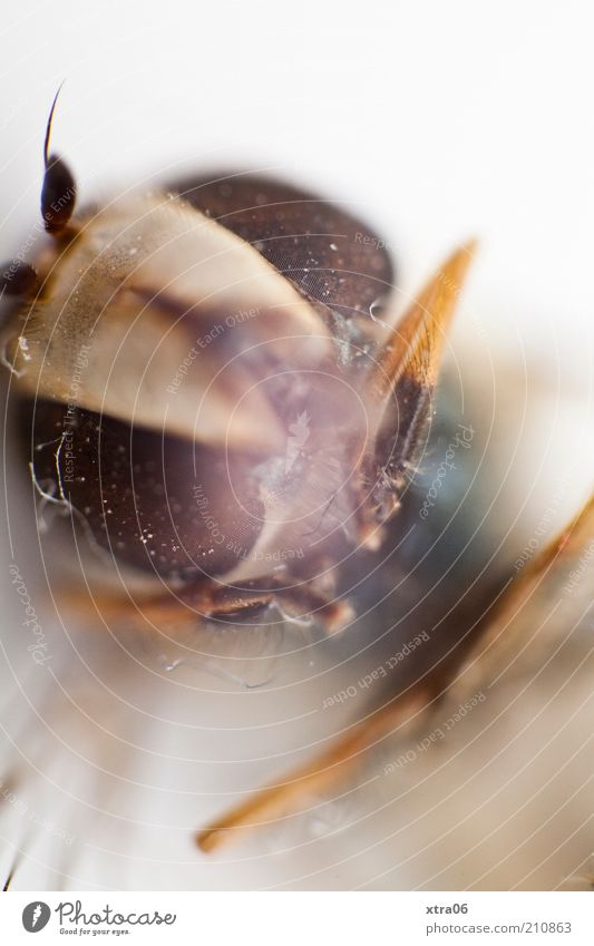Look me in the eye Animal Insect Compound eye Feeler Legs Head Animal face Animal portrait Colour photo Close-up Detail Macro (Extreme close-up)