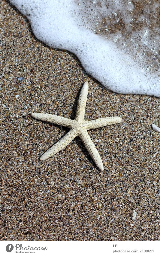 starfish on the beach Lifestyle Wellness Harmonious Well-being Contentment Senses Relaxation Calm Meditation Spa Leisure and hobbies Vacation & Travel Tourism