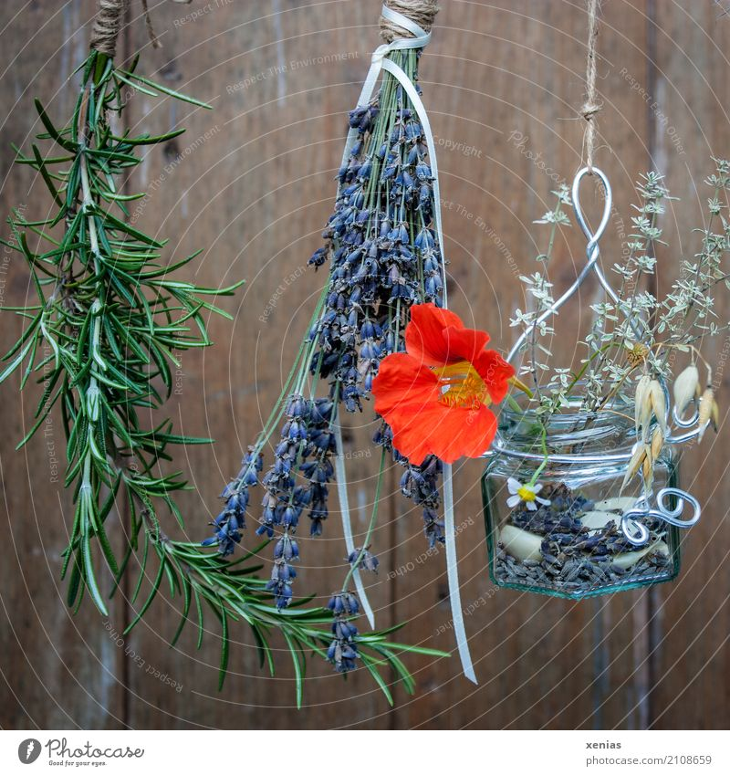 Hold on to the summer. Summer Rosemary Lavender Camomile blossom Grain Nasturtium Thyme Wood Hang Brown Green Violet Orange Dry Glass String Colour photo