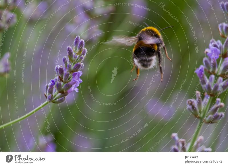 Nature Plant Summer Animal Blossom Spring Park Weather Environment Flying Climate Violet Wing Insect Blossoming Wild animal