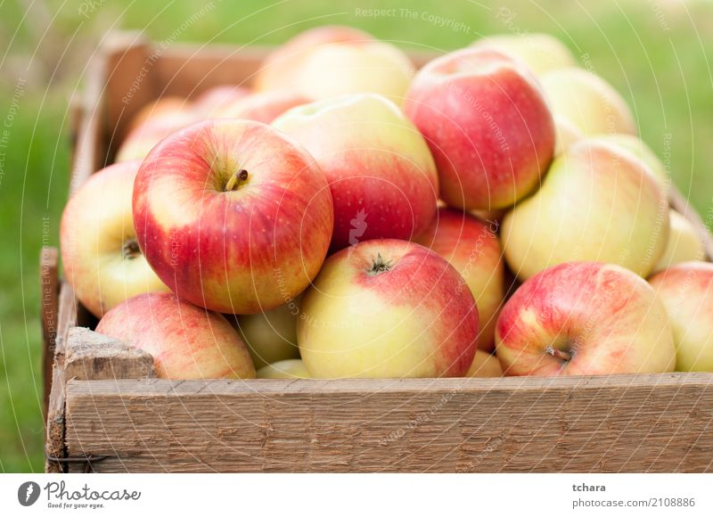 Ripe apples Vegetable Fruit Apple Nutrition Vegetarian diet Diet Summer Group Nature Tree Wood Fresh Bright Delicious Natural Juicy Green Red Colour background