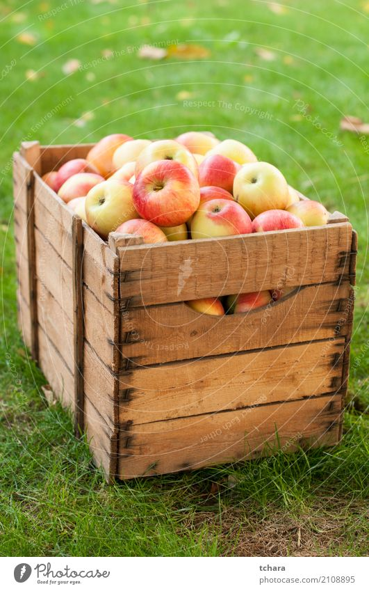 Ripe apples Vegetable Fruit Apple Nutrition Vegetarian diet Diet Summer Nature Tree Leaf Wood Fresh Bright Delicious Natural Juicy Green Red White Colour