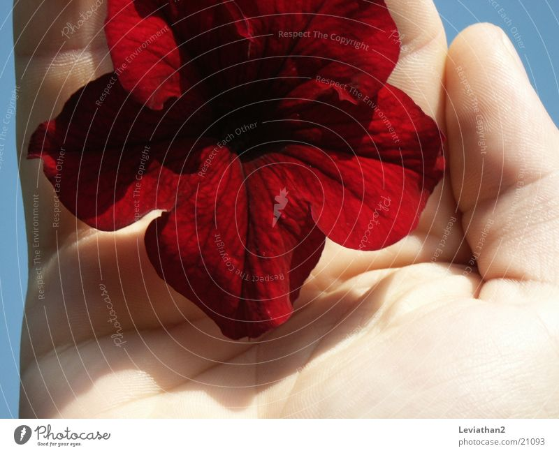 Woman Human being Hand Red Plant Flower Blossom Intensive Fingerprint