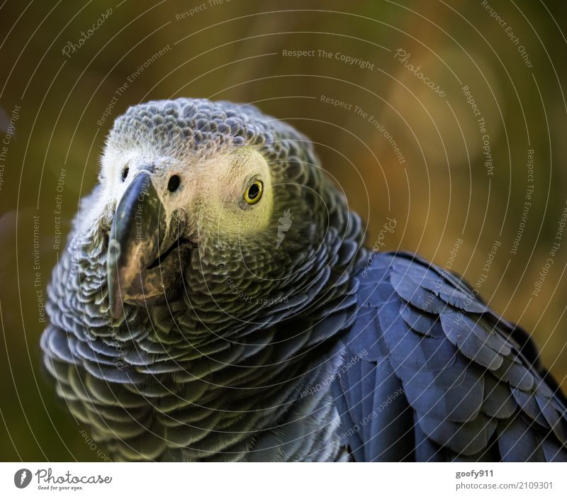 Serious look!!! Environment Nature Spring Summer Desert Animal Wild animal Bird Animal face Wing Zoo Parrots 1 Observe Vacation & Travel Looking Esthetic