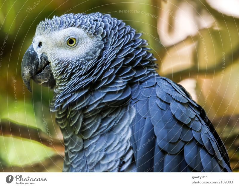 Side view!!!!! Environment Nature Forest Virgin forest South Africa Animal Wild animal Bird Animal face Wing Zoo Parrots 1 Observe To enjoy Vacation & Travel