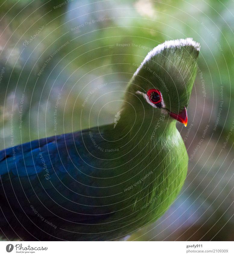 Nature Summer Beautiful Green Sun Landscape Animal Forest Environment Spring Natural Exceptional Bird Illuminate Elegant Esthetic