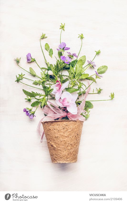 Pot with flowers on white Style Design Leisure and hobbies Summer Garden Nature Plant Flower Leaf Blossom Decoration Bouquet Pink Flowerpot Gift Pastel tone
