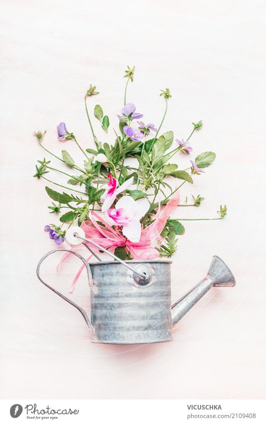 Watering can with flowers Style Design Leisure and hobbies Garden Nature Plant Flower Decoration Bouquet Gardening Gift Colour photo Studio shot Close-up