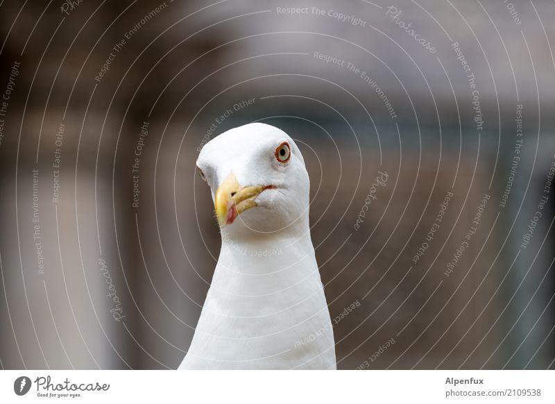 Animal Cold Bird Wild animal Threat Curiosity Seagull Animal face Brash Aggression Expectation Maritime Rebellious Aggravation Dominant Dominatrix
