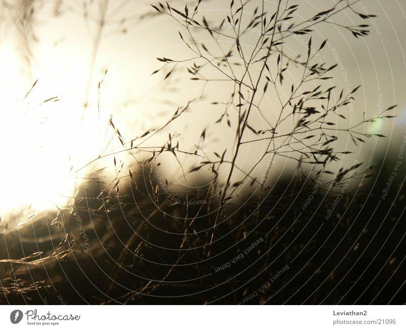 Grass on an October evening Blade of grass Meadow Close-up Romance Sun Macro (Extreme close-up)