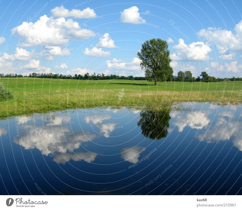 After the rain Environment Nature Landscape Plant Water Sky Clouds Weather Tree Grass Meadow Lakeside Bog Marsh Pond Hungary Green Blue Mirror Shadow Beautiful