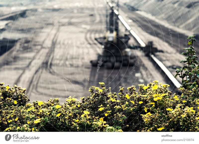 Flower photo with young tuscany Machinery Landscape Bushes Energy Coal Lignite Soft coal mining Excavator Pit Colour photo Exterior shot Experimental
