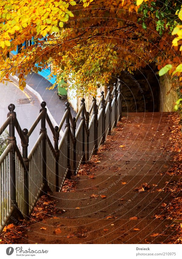 Tree Leaf Colour Yellow Autumn Environment Lanes & trails Stone Metal Park Weather Brown Gold Going Stairs Europe
