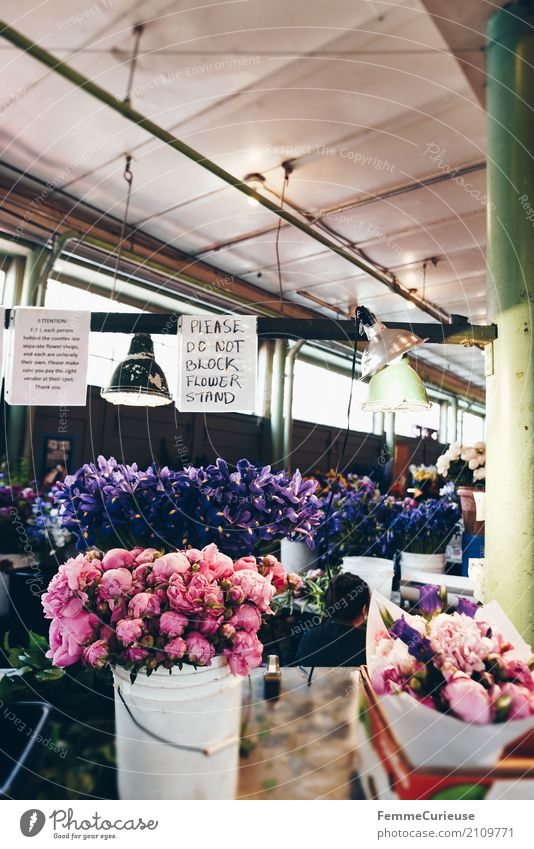 Roadtrip West Coast USA (259) Plant Fragrance Covered market Market day Seattle Peony Bucket Bouquet Signage Ceiling Hanging lamp Colour photo Interior shot Day