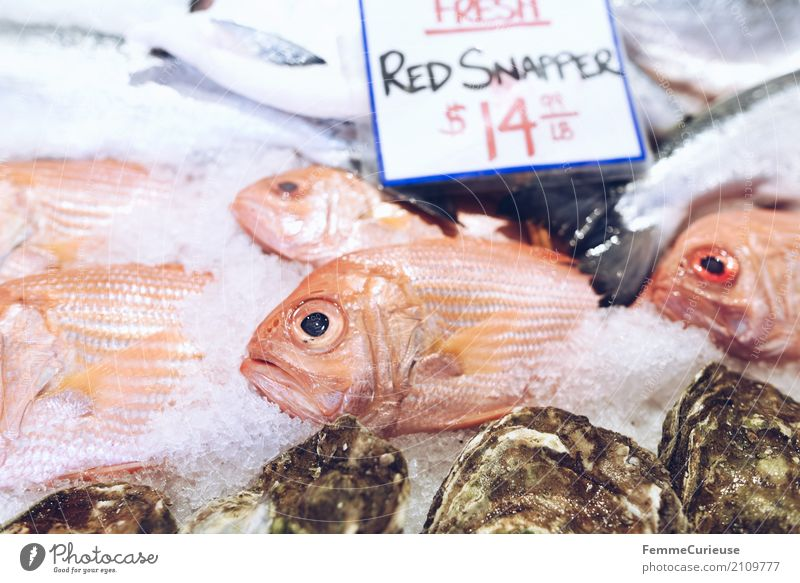 Roadtrip West Coast USA (242) Animal To enjoy Fish market Market day English red snapper Snapper Predatory fish Fishmonger Price tag Ice US Dollar Colour photo