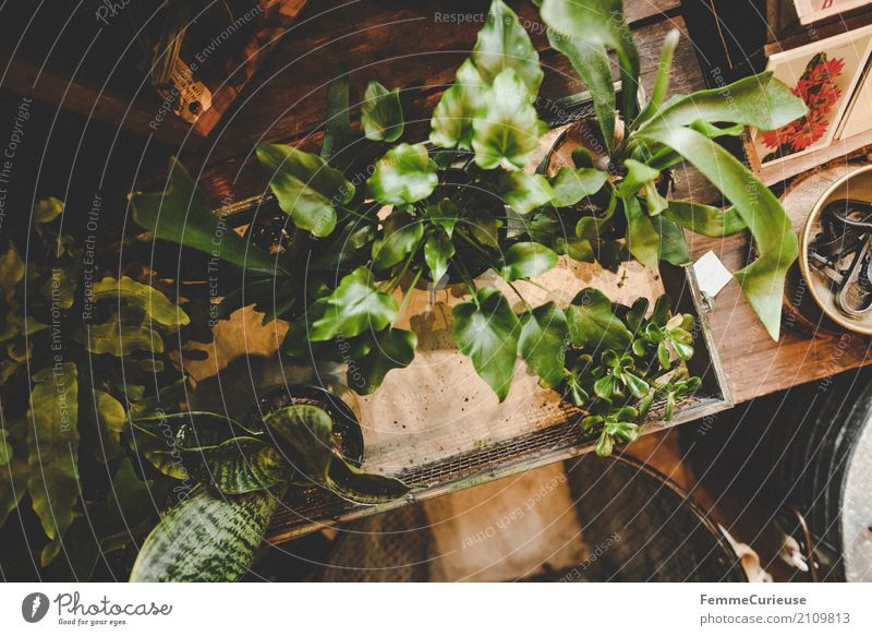 Nature Plant Decoration Table Card Foliage plant Pot plant Houseplant Gardenhouse Flower shop