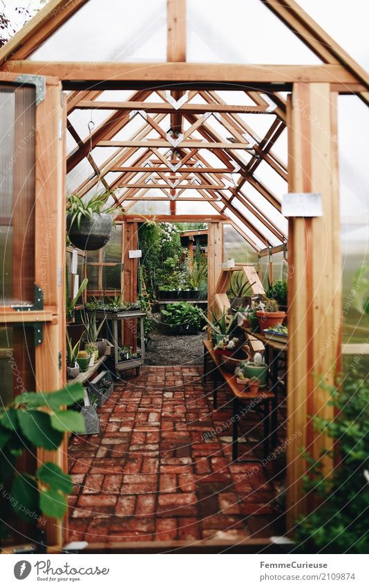 Roadtrip West Coast USA (162) Nature Shopping Greenhouse Gardening Plant hanging lights Cactus Discover Search Stone floor wooden frames Wood Bright Decoration