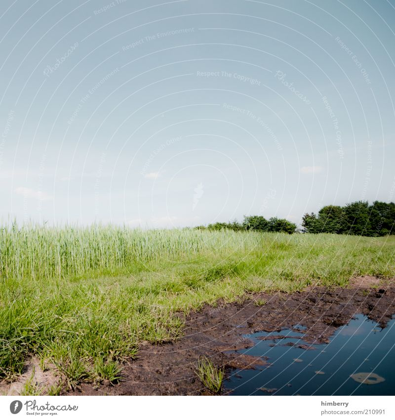 wet hole Environment Nature Landscape Plant Water Sky Cloudless sky Spring Summer Climate Weather Beautiful weather Meadow Field Bog Marsh Pond Spring fever