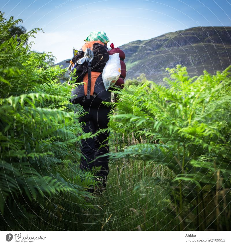 Young woman with hiking rucksack in green forest, back view Vacation & Travel Trip Adventure Hiking Youth (Young adults) Nature Animal Fern Backpacking vacation