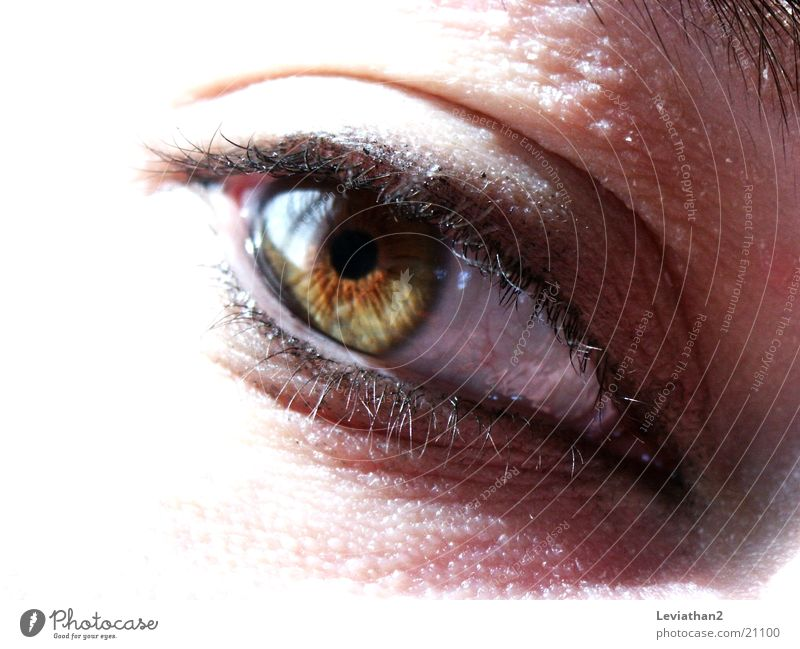 Views of one eye Green Brown Eyelash Human being Eyes green brown Close-up Bright