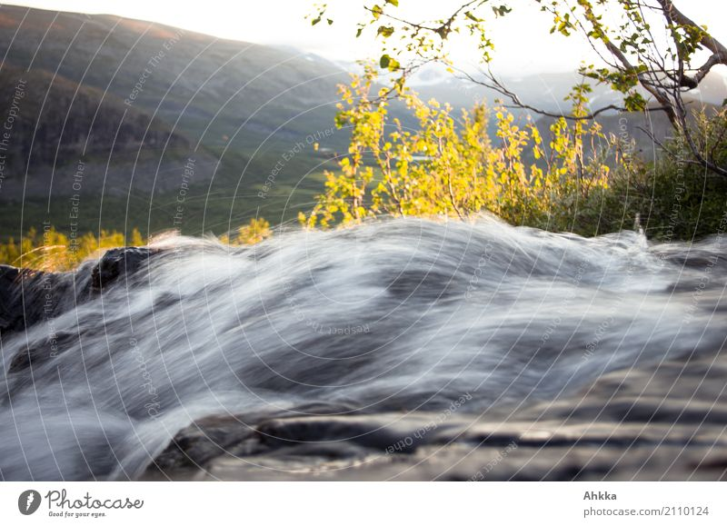Bergbach in backlight, long-term photo, Sweden, Rappadalen Environment Nature Landscape Elements Water Tree Mountain River Waterfall Movement Energy Speed Power