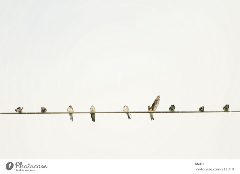 Sky Animal Line Moody Bright Together Bird Small Free Sit Electricity Group of animals Cable Natural Brave Wild animal
