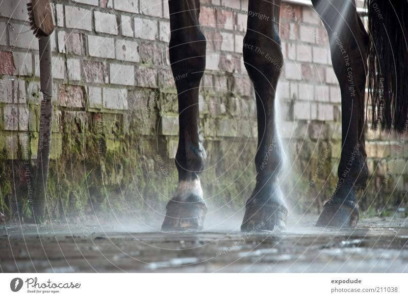Animal Movement Legs Dirty Wet Perspective Horse Authentic Cleaning Clean Inject Ride Responsibility Farm animal Barn Hoof