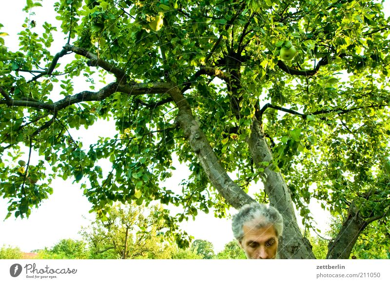 Human being Man Nature Tree Plant Adults Relaxation Head Hair and hairstyles Garden Park Masculine Nose Growth 45 - 60 years Forehead