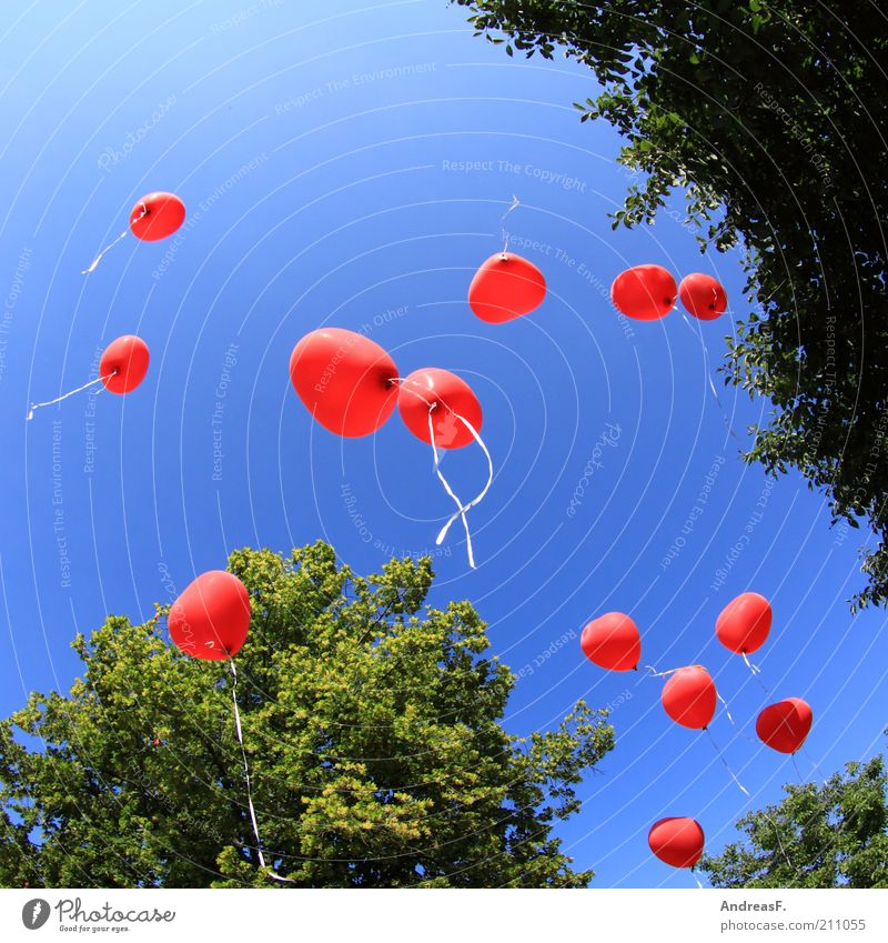 Sky Summer Tree Red Love Happy Air Feasts & Celebrations Together Flying Heart Free Balloon String Romance Event