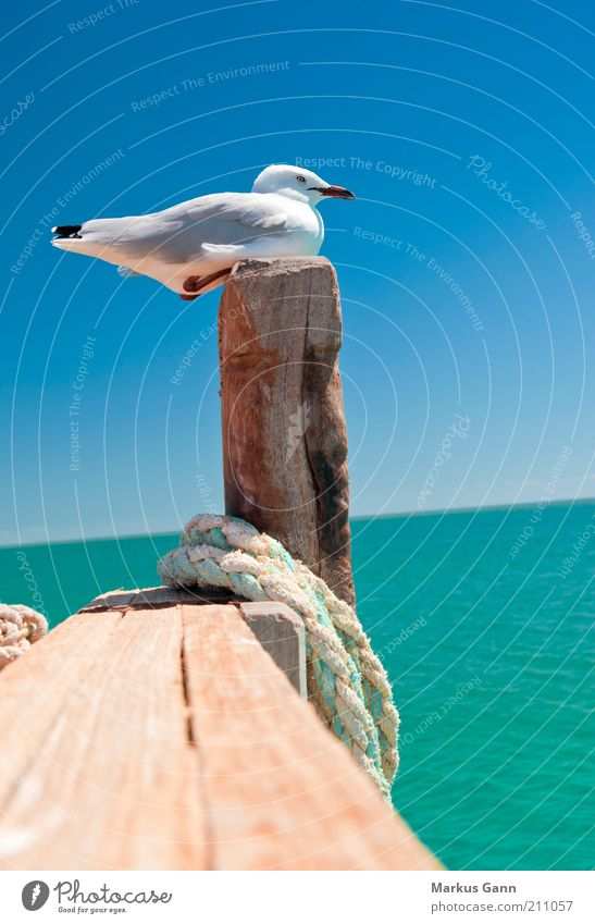 Nature Water Summer Calm Animal Life Relaxation Wood Bird Coast Rope Sit Feather Beautiful weather Seagull Beak