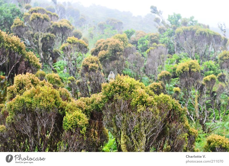 Green Plant Calm Animal Forest Above Mountain Landscape Contentment Bird Fog Island Bushes Peace Wild animal Treetop