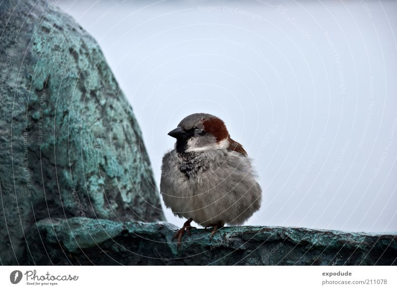 Lesser Sparrow Animal Wild animal Bird 1 Baby animal Observe Crouch Cuddly Natural Curiosity Cute Blue Brown Gray Green Black Loneliness Uniqueness Environment