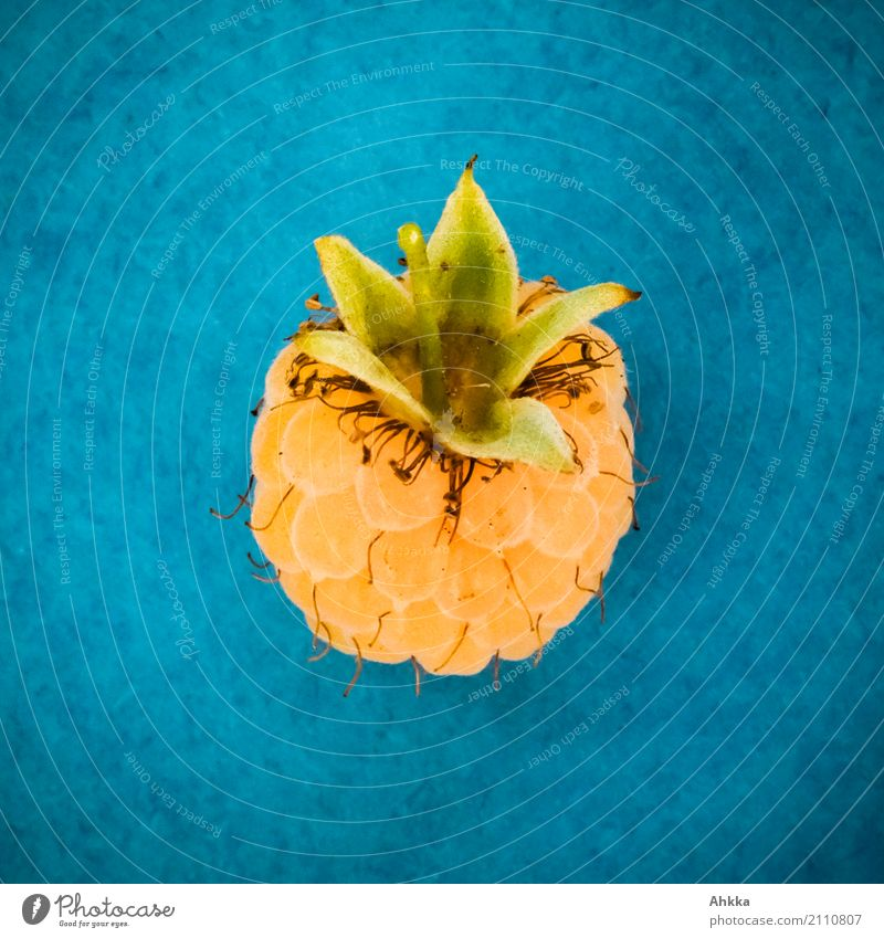 Pineapple Association Fruit Raspberry Nutrition Organic produce Vegetarian diet Diet Fasting Slow food Life Fresh Small Delicious Sweet Blue Yellow Colour photo
