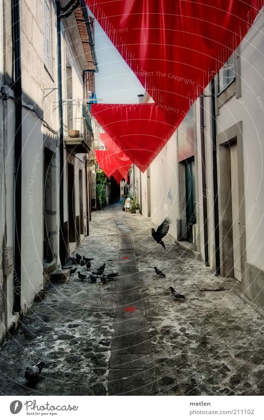travessa Small Town Pigeon Flock Stone Red Black White Moody Alley Lanes & trails House (Residential Structure) Central perspective Deserted Decoration Triangle