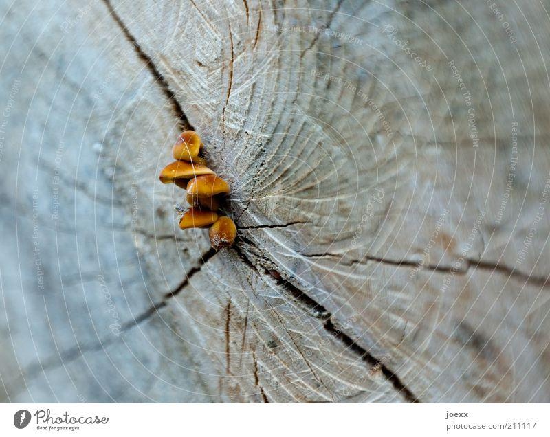 Tree Blue Life Wood Brown Hope Change Decline Mushroom Tree trunk